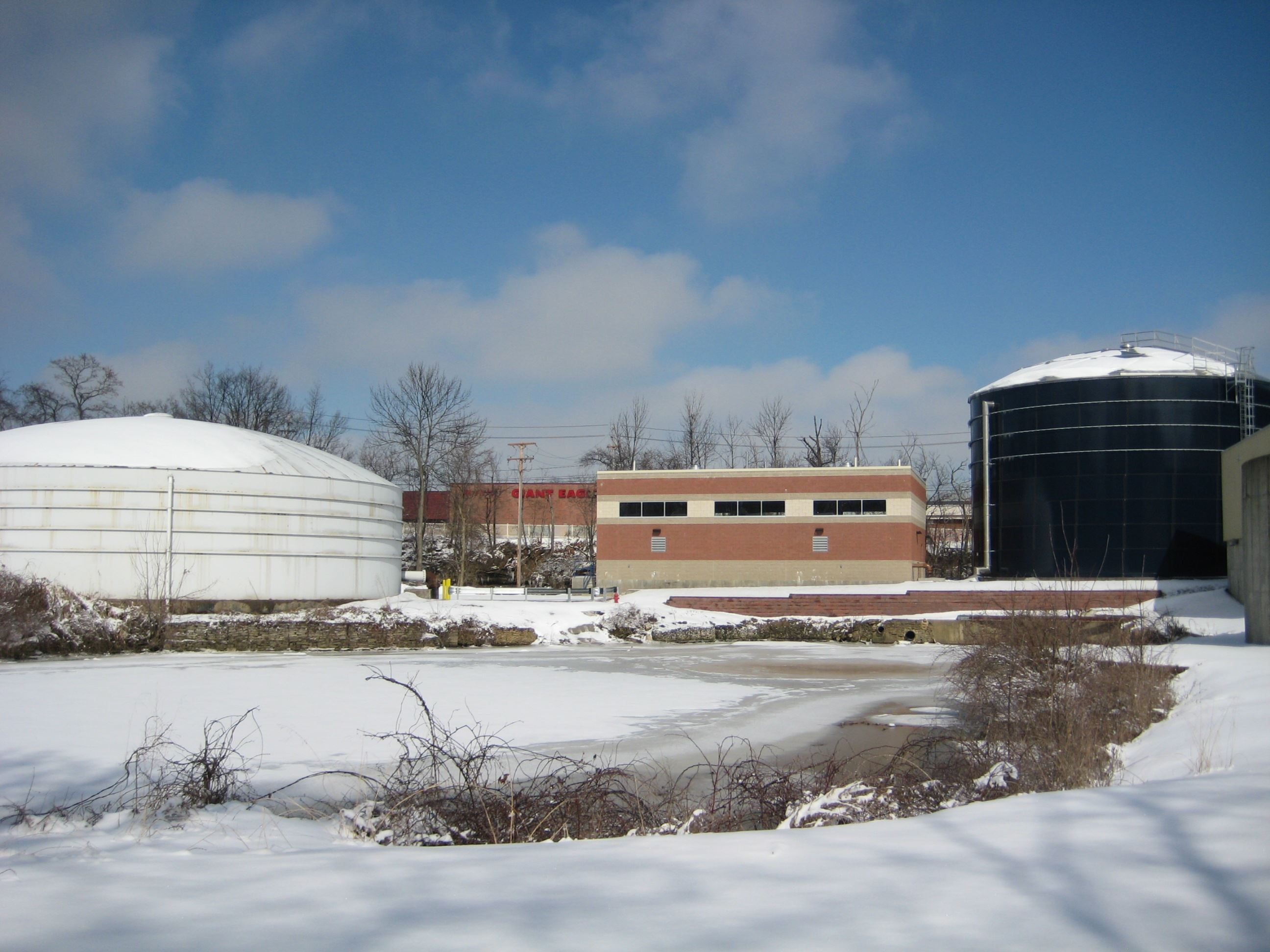 water plant in winter